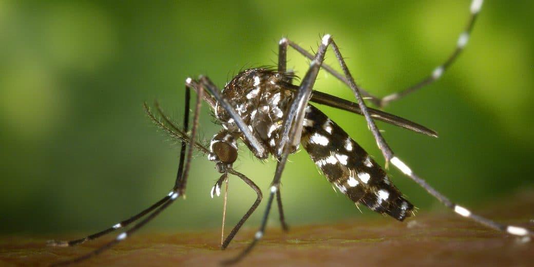 Klimaanlage gegen die Mückenplage
